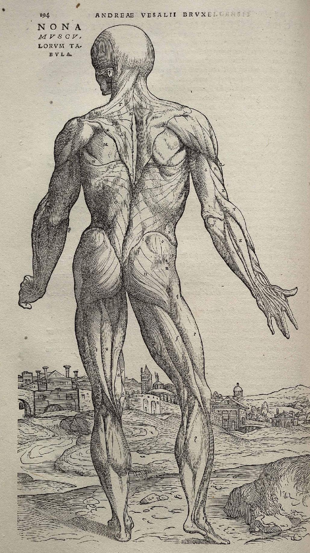Vesalio: La Anatomía prodigiosa | La balsa de la Nostromo
